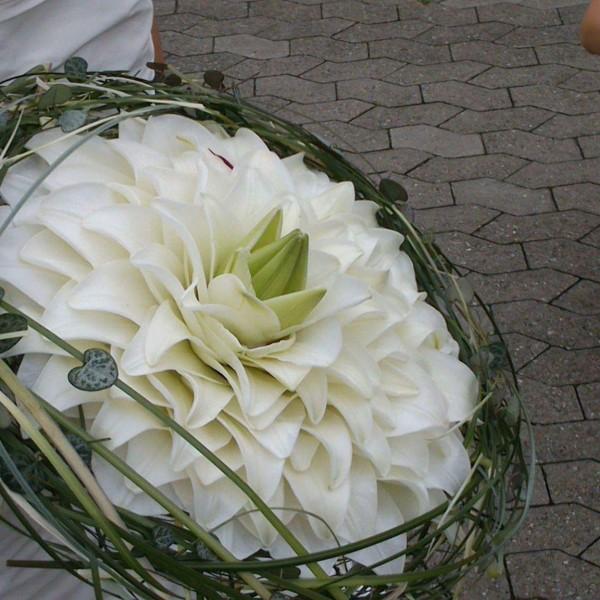 syet lilje med græskrans